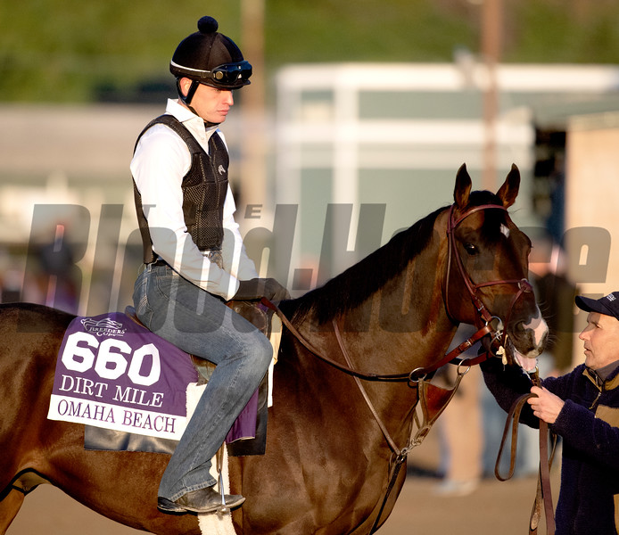 Omaha Beach headed our for a gallop on the Santa Anita Race Course Thursday October 31, 2019 in Arcadia, CA.  Photo by Skip Dickstein