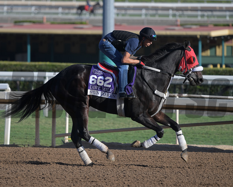 Spun to Run<br /> at  Oct. 29, 2019 Santa Anita in Arcadia, CA.