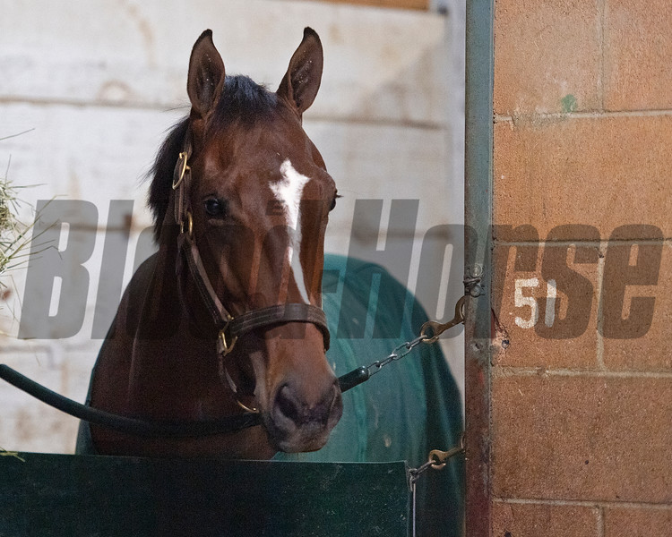 Gear Jockey<br /> at  Oct. 30, 2019 Santa Anita in Arcadia, CA.