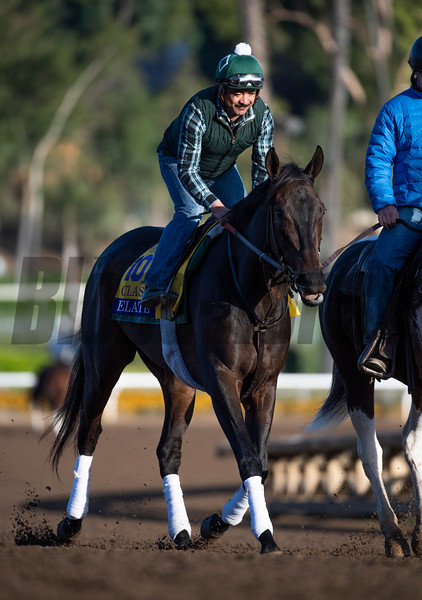 Elate out for a gallop at Santa Anita Race Course Wednesday October 30, 2019 in Arcadia, CA.  Photo by Skip Dickstein