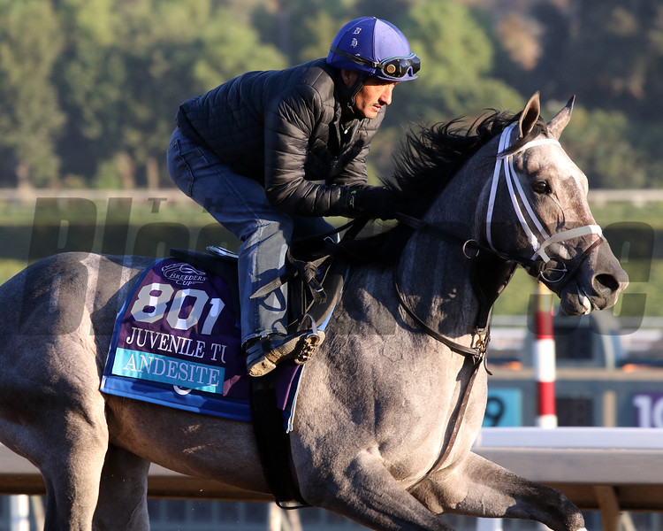Andesite at Santa Anita Park on October 31, 2019. Photo By: Chad B. Harmon