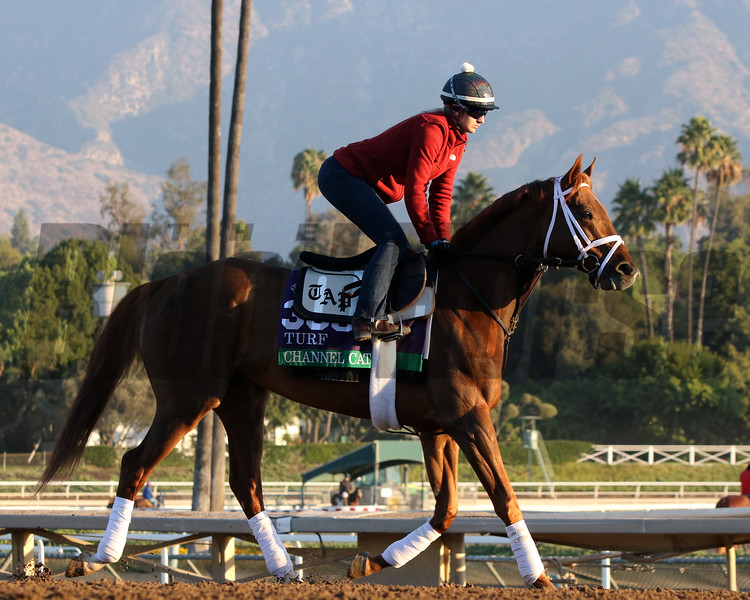 Channel Cat at Santa Anita Park on October 31, 2019. Photo By: Chad B. Harmon