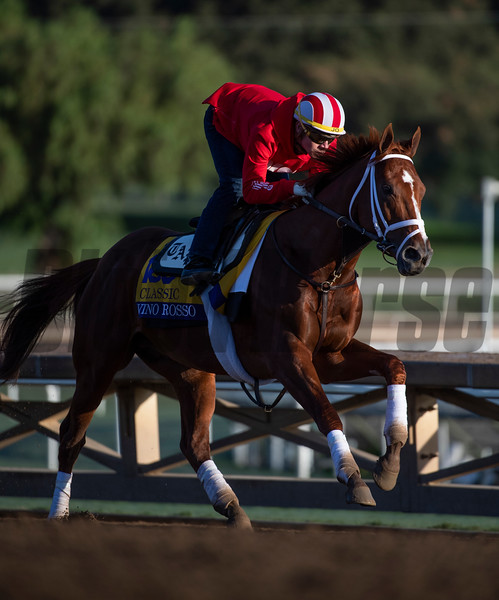 Classic entrant Vino Rosso out for a gallop at Santa Anita Race Course Wednesday October 30, 2019 in Arcadia, CA.  Photo by Skip Dickstein