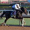 Bolo<br /> Horses and scenes at  Oct. 26, 2019 Santa Anita in Arcadia, CA.