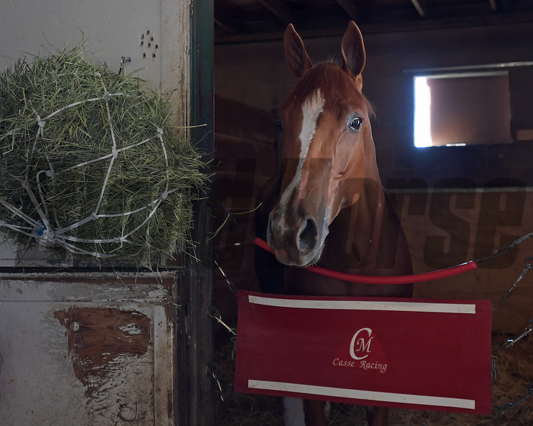 Got Stormy<br /> at  Oct. 27, 2019 Santa Anita in Arcadia, CA.