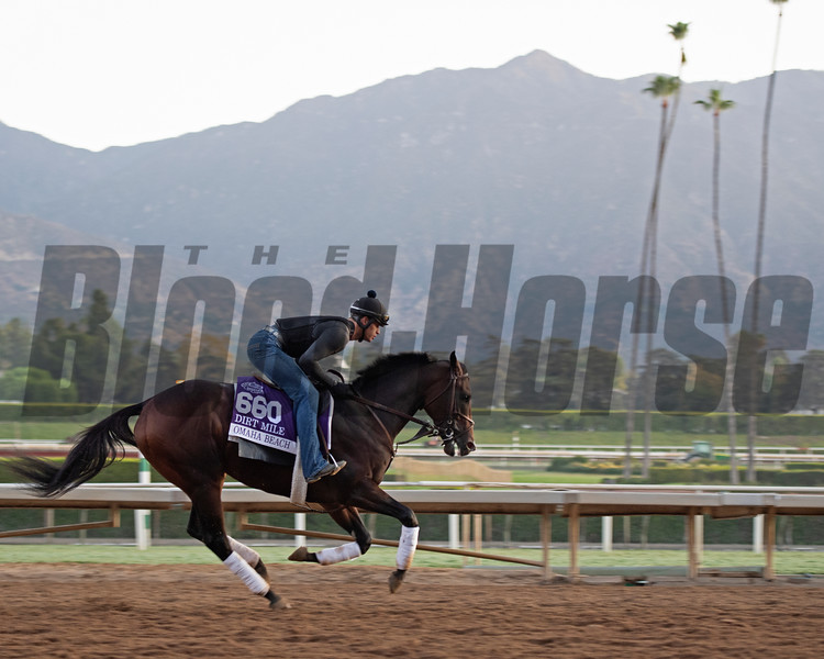 Omaha Beach<br /> at  Oct. 28, 2019 Santa Anita in Arcadia, CA.