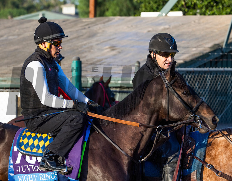 Eight Rings out for a gallop at Santa Anita Race Course Wednesday October 30, 2019 in Arcadia, CA.  Photo by Skip Dickstein