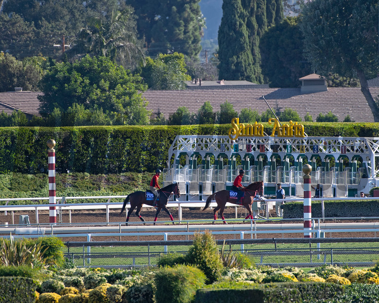 l-r, Full Flat and Matera Sky<br /> Horses and scenes at  Oct. 26, 2019 Santa Anita in Arcadia, CA.