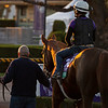 United<br /> Horses and scenes at  Oct. 26, 2019 Santa Anita in Arcadia, CA.