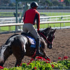 Full Flat<br /> Horses and scenes at  Oct. 26, 2019 Santa Anita in Arcadia, CA.