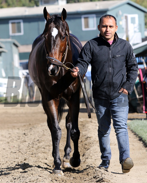 Imperial Hint at Santa Anita Park on October 31, 2019. Photo By: Chad B. Harmon