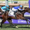 Structor wins the 2019 Breeders' Cup Juvenile Turf    <br /> Dave Harmon Photo