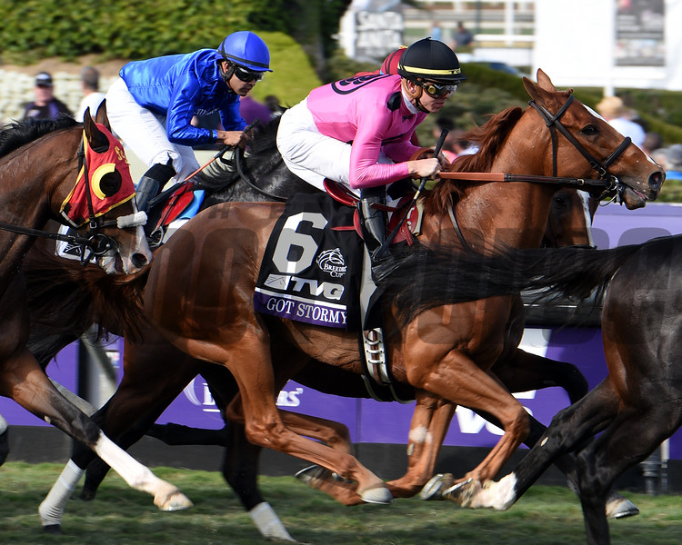 Got Stormy during the running of the 2019 Breeders' Cup Mile<br /> Dave W. Harmon Photo
