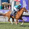 Horse Name