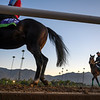 Horses leave the track during a break on the main track  for maintenance at Santa Anita Race Course Wednesday October 30, 2019 in Arcadia, CA.  Photo by Skip Dickstein