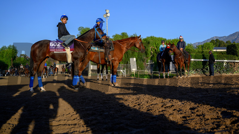 Eddie Haskel is a good boy during a break on the main track  for maintenance at Santa Anita Race Course Wednesday October 30, 2019 in Arcadia, CA.  Photo by Skip Dickstein
