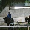 Horses leave the training track during a break on the main track  for maintenance at Santa Anita Race Course Wednesday October 30, 2019 in Arcadia, CA.  Photo by Skip Dickstein