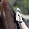 microchip detector. Santa Anita horse identification team<br /> at  Oct. 29, 2019 Santa Anita in Arcadia, CA.