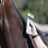 microchip detector. Santa Anita horse identification team<br /> at  Oct. 29, 2019 Santa Anita in Arcadia, CA.