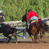 An outrider grabs an out of control horse as the exercise rider is unseated from his charge on the Santa Anita Race Course Thursday October 31, 2019 in Arcadia, CA.  Photo by Skip Dickstein