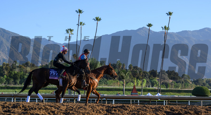 Perfect Alibi at Santa Anita Race Course Wednesday October 30, 2019 in Arcadia, CA.  Photo by Skip Dickstein