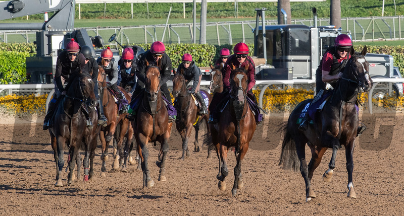 Aiden O'Brien's charges out in force on their first day out on the Santa Anita Race Course Thursday October 31, 2019 in Arcadia, CA.  Photo by Skip Dickstein