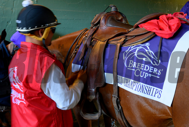 An outrider gets ready to take the field of one of the Breeders' Cup races at Santa Anita Park November 1, 2019 in Arcadia, CA.  Photo by Skip Dickstein