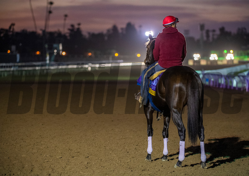 Ollies Candy waits for the tractors to pass during a break on the main track  for maintenance at Santa Anita Race Course Wednesday October 30, 2019 in Arcadia, CA.  Photo by Skip Dickstein