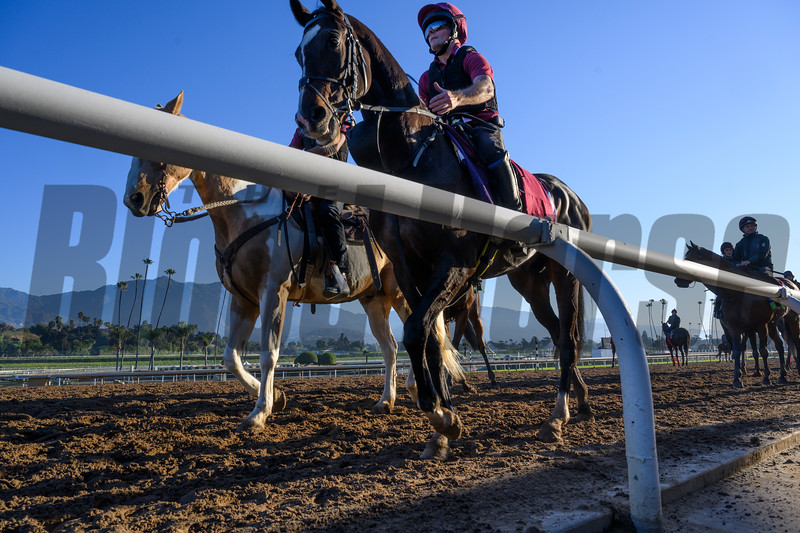O'Brien charges return to their barn on the Santa Anita Race Course Thursday October 31, 2019 in Arcadia, CA.  Photo by Skip Dickstein