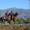 Breeders' Cup horses gallop with the mountains in the background on the main track at Santa Anita Race Course Wednesday October 30, 2019 in Arcadia, CA.  Photo by Skip Dickstein