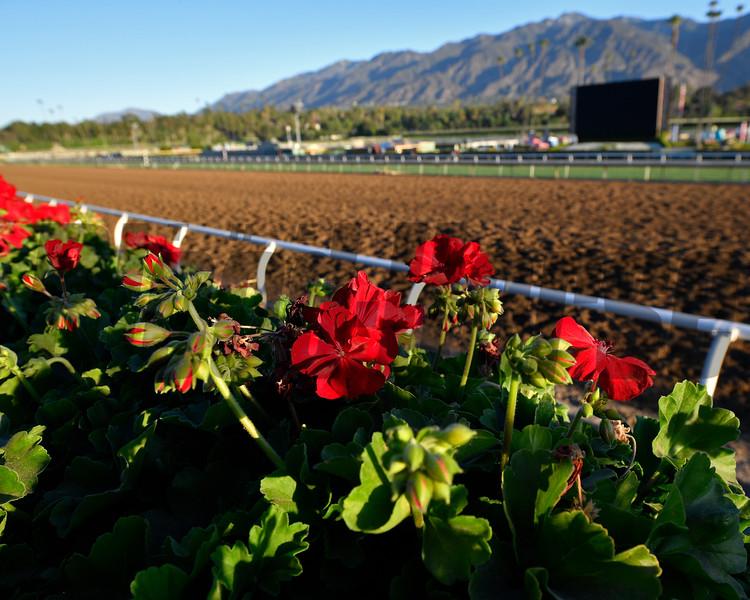 Horses and scenes at  Oct. 26, 2019 Santa Anita in Arcadia, CA.