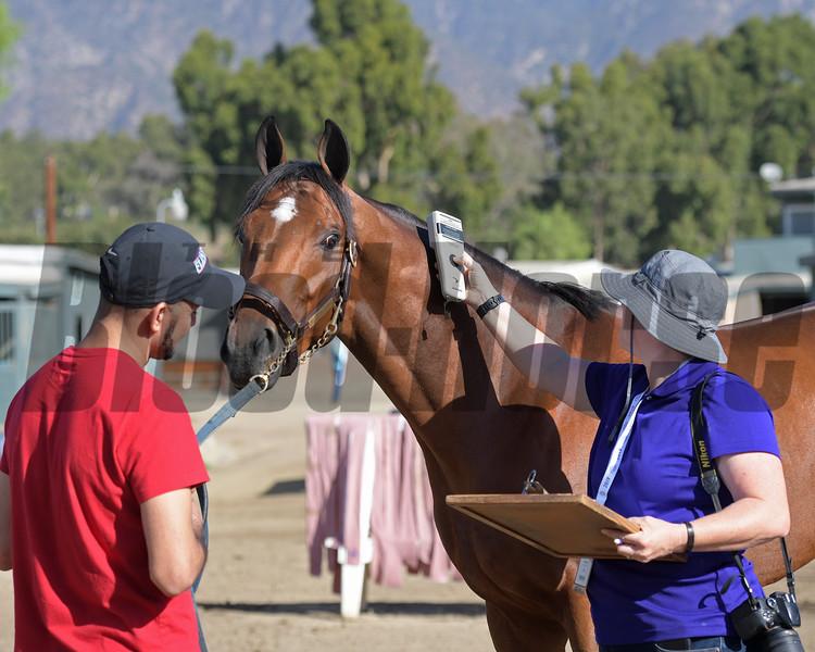 Without Parole with  Santa Anita horse identification team<br /> at  Oct. 29, 2019 Santa Anita in Arcadia, CA.