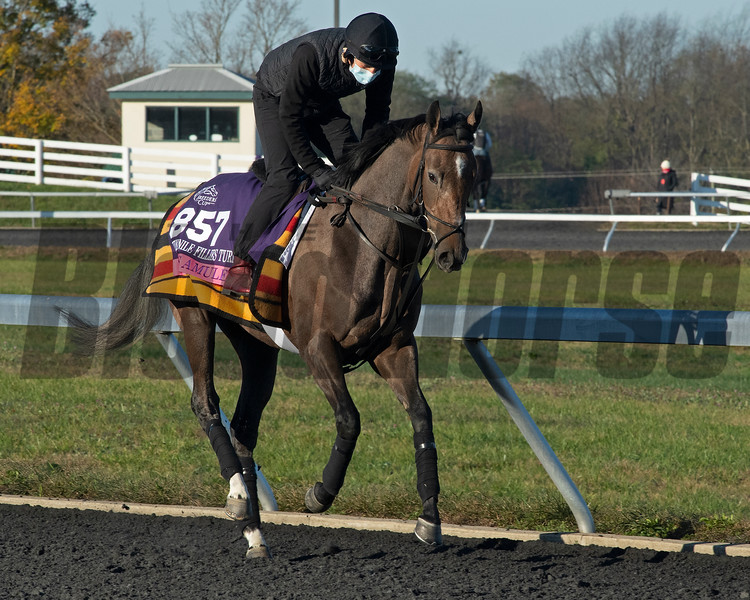 Miss Amulet<br /> Breeders' Cup horses at Keeneland in Lexington, Ky. on November 2, 2020.