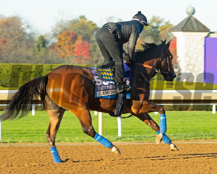 Gamine<br /> Breeders' Cup horses at Keeneland in Lexington, Ky. on November 4, 2020.