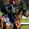Mighty Gurkha<br /> Breeders' Cup horses at Keeneland in Lexington, Ky. on November 5, 2020.
