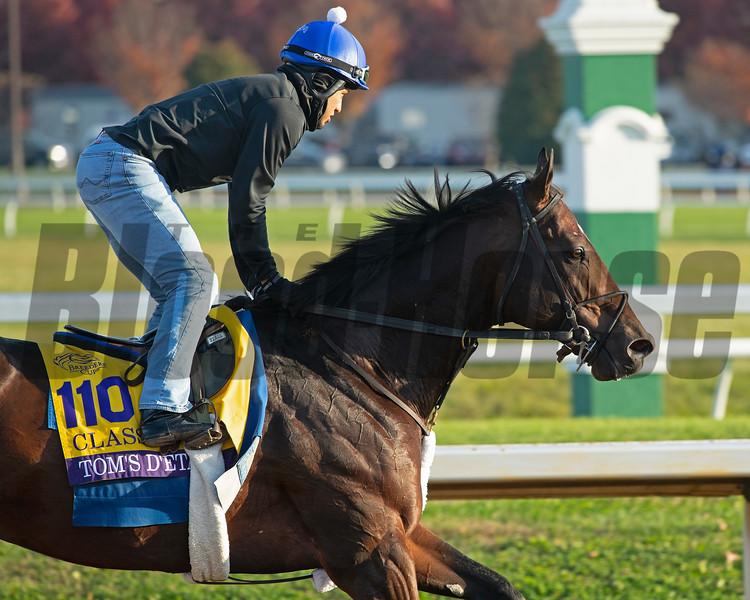 Tom's d'Etat<br /> Breeders' Cup horses at Keeneland in Lexington, Ky. on November 5, 2020.