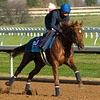 Sealiway<br /> Breeders' Cup horses at Keeneland in Lexington, Ky. on November 5, 2020.