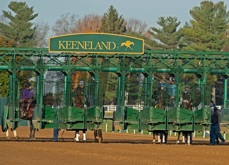 Gate Schooling including Tom's d'Etat, second right in stall.<br /> Breeders' Cup horses at Keeneland in Lexington, Ky. on November 5, 2020.
