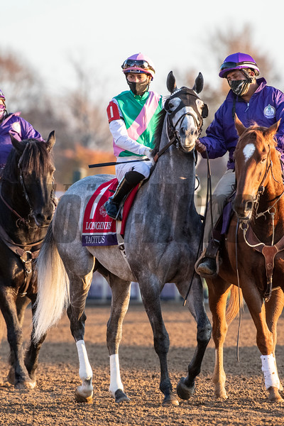 Tacitus ridden by Jose Ortiz prior to the $2M Breeders' Cup Classic G1 at Keeneland Race Course Saturday Nov. 7,  2020 in Lexington, KY.  Photo by Skip Dickstein