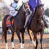 Global Campaign ridden by Javier Casteliano prior to the $2M Breeders' Cup Classic G1 at Keeneland Race Course Saturday Nov. 7,  2020 in Lexington, KY.  Photo by Skip Dickstein