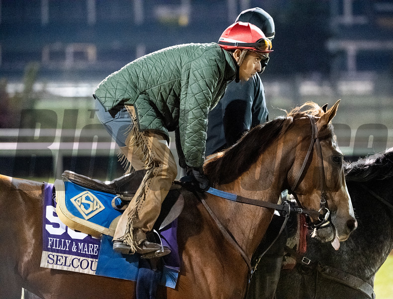 Selcourt out for morning exercise Tuesday Oct. 30, 2018 at Churchill Downs in preparation for the 2018 Breeders' Cup in Louisville, KY.  Photo by Skip Dickstein