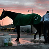 Yoshida is bathed during the beautiful morning sunrise Sunday Oct. 28, 2018 before the Breeders' Cup at Churchill Downs in Louisville, KY Photo by Skip Dickstein