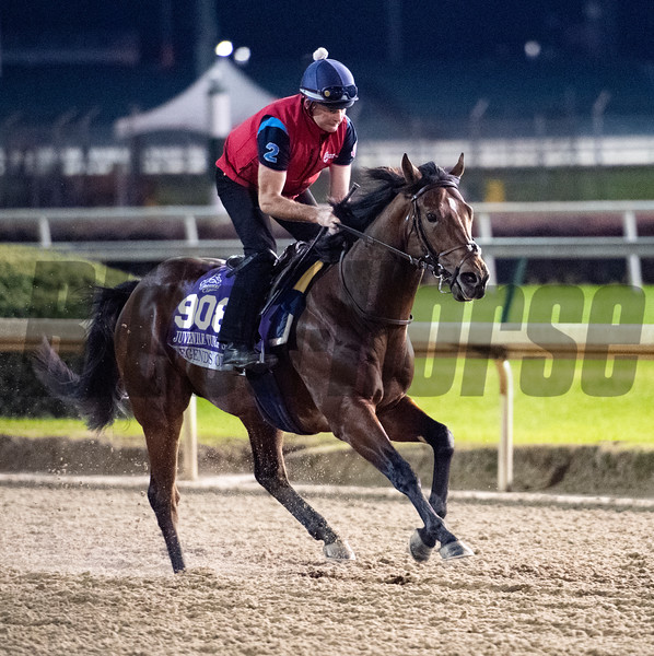 Legends of War takes to the track for morning exercise before the Breeders' Cup at Churchill Downs Wednesday Oct. 31, 2018 in Louisville, KY.  Photo by Skip Dickstein