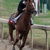 Promises Fulfilled works Sunday Oct. 28, 2018 before the Breeders' Cup at Churchill Downs in Louisville, KY Photo by Skip Dickstein