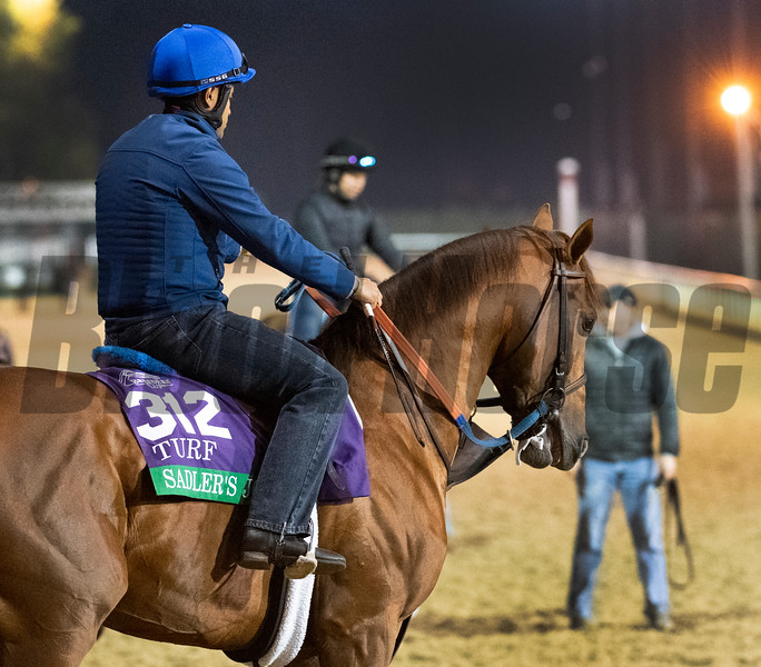 Sadler's Joy out for morning exercise Tuesday Oct. 30, 2018 at Churchill Downs in preparation for the 2018 Breeders' Cup in Louisville, KY.  Photo by Skip Dickstein
