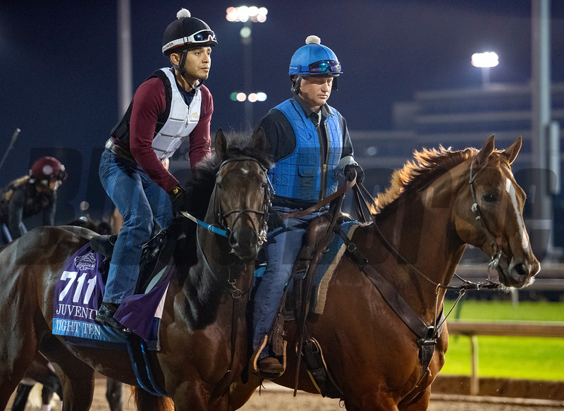 Tight Ten takes to the track for morning exercise before the Breeders' Cup at Churchill Downs Wednesday Oct. 31, 2018 in Louisville, KY.  Photo by Skip Dickstein