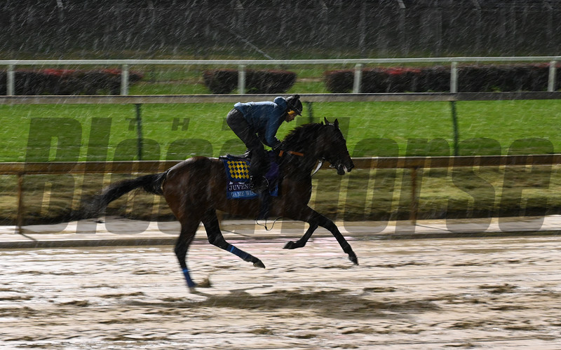 Game Winner gallops through the mud this morning Thursday Nov. 1, 2018 at Churchill Downs the home of the 2018 Breeders' Cup in Louisville, KY.  Photo by Skip Dickstein