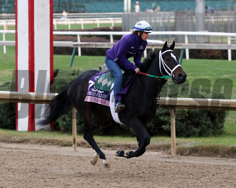 Sippican Harbor Breeders' Cup Churchill Downs Chad B. Harmon
