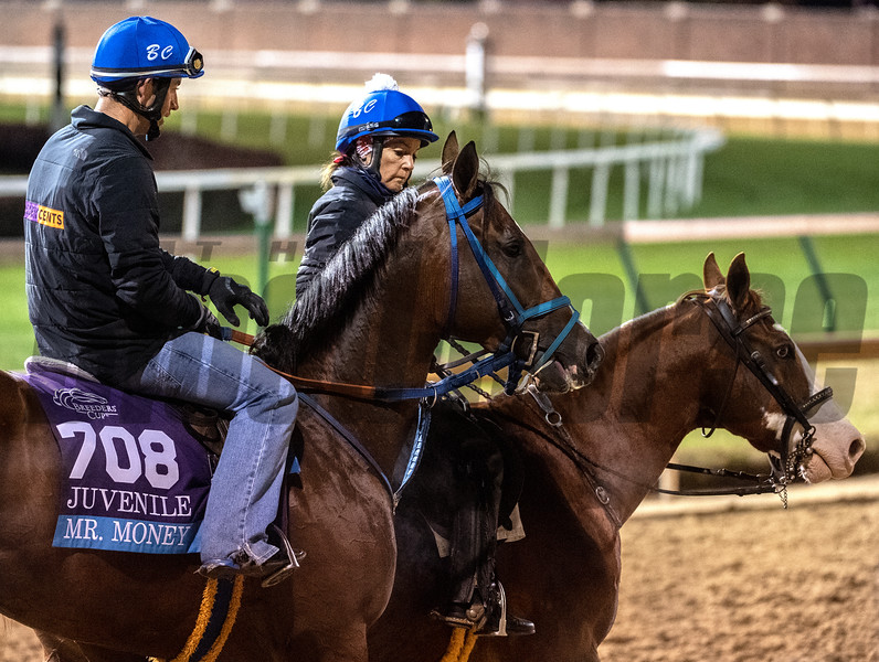 Mr. Money on track at Churchill Downs on Breeders' Cup week Monday October 29, 2018 in Louisville, KY.  Photo by Skip Dickstein