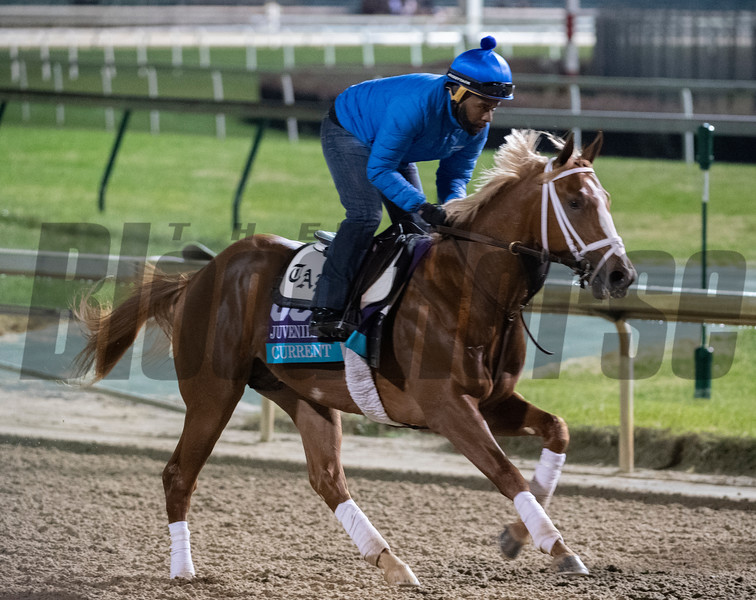 Current out for morning exercise Tuesday Oct. 30, 2018 at Churchill Downs in preparation for the 2018 Breeders' Cup in Louisville, KY.  Photo by Skip Dickstein